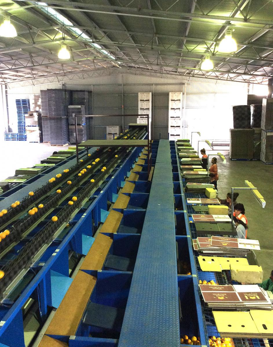 Margram Farms Packing Shed Photo Gallery Margram Citrus